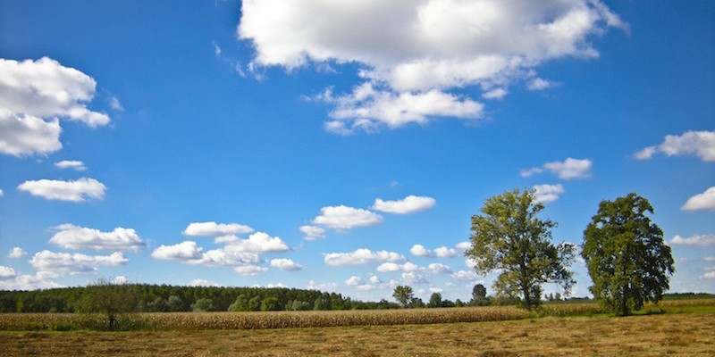 Farmland Prices, Sales Activity Flat Across Illinois